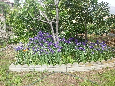 Forum bonsai leggi argomento piccoli angoli di paradiso for Foto angoli giardino
