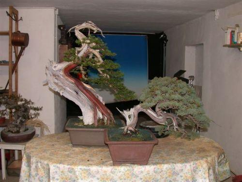 Tecniche per fotografare bonsai bonsaiclub