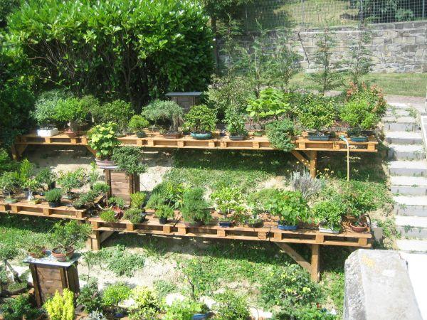 Il mio giardino bonsaiclub