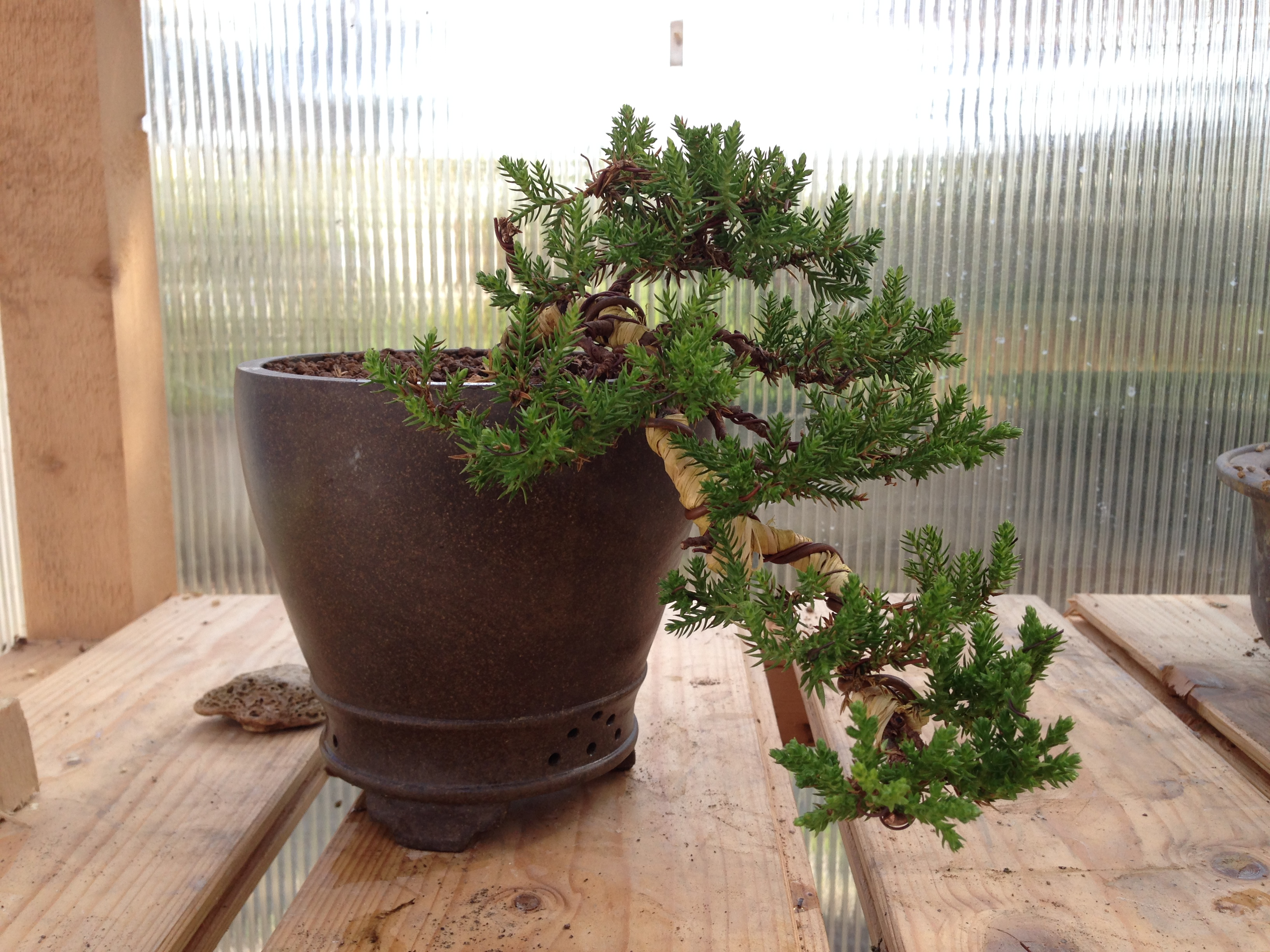 Vendita vasi bonsai 28 images mercatino bonsai forum for Bonsai vasi